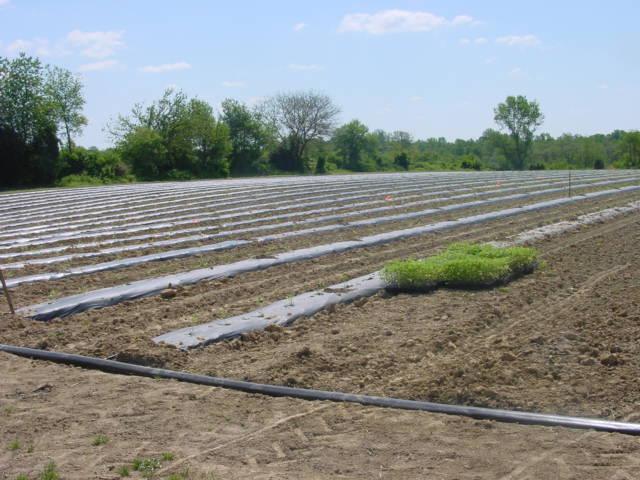 15 mil t-tape by rivulus is brand, high quality drip irrigation, Garten ideen