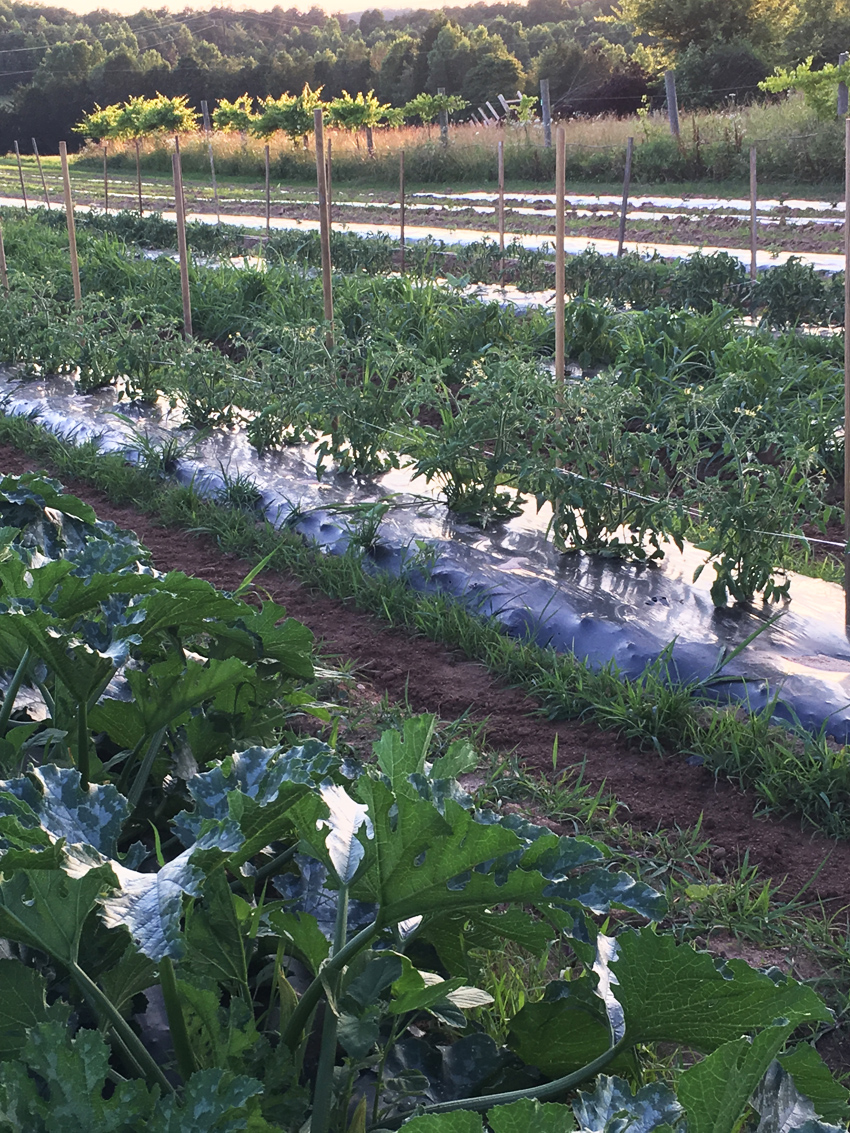 Berry Hill Irrigation ...