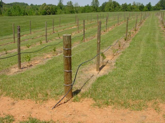 berry hill drip irrigation,berry hill drip irrigation berry hill, Garten ideen